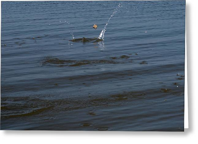 Skipping Stone Greeting Card by Joshua House