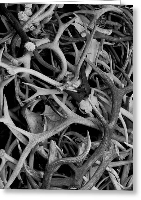 Skull And Antlers Greeting Card by Jen TenBarge