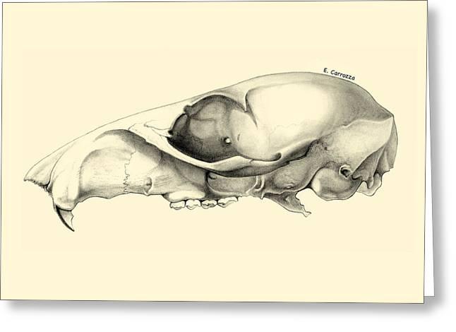 Skull Study Greeting Card