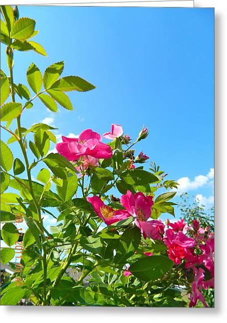 Skyward Roses Greeting Card by Randy Rosenberger