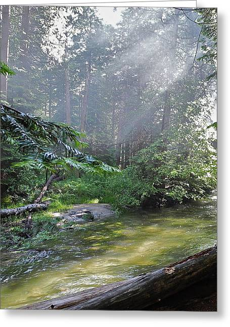 Greeting Card featuring the photograph Slanting Sunlight On River by Kirsten Giving