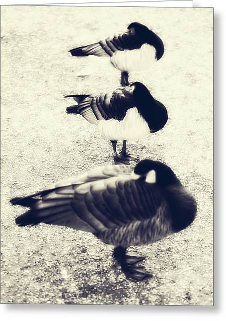 Sleeping Ducks Greeting Card by Joana Kruse