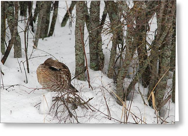 Sleeping Grouse On Snow Greeting Card
