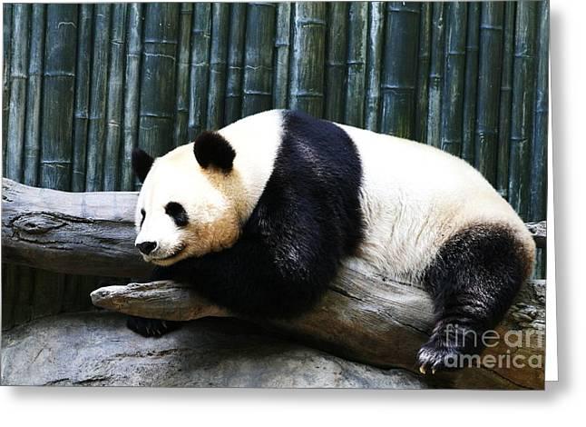 Sleeping Panda Greeting Card