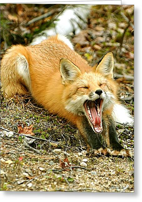 Greeting Card featuring the photograph Sleepy Fox by Rick Frost