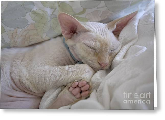 Sleepy Kitty Greeting Card by Glennis Siverson