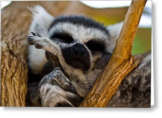 Sleepy Lemur Greeting Card