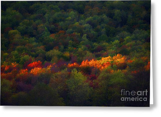 Slice Of Light Evening In Fall Greeting Card by Dan Friend