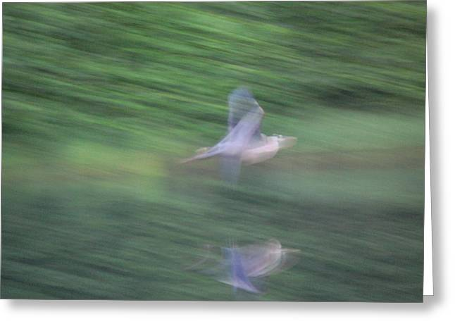 Slow Evening Shutter Greeting Card