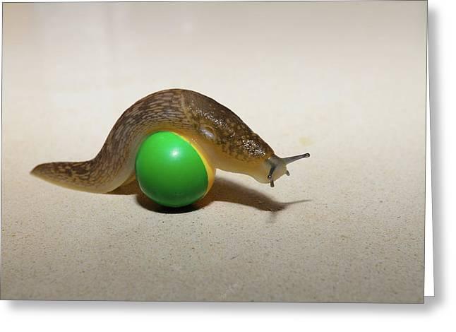 Slug On The Ball Greeting Card