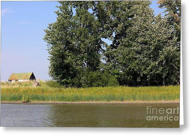 Small Barn Big Trees Greeting Card by Sophie Vigneault