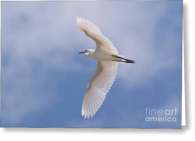Greeting Card featuring the photograph Small Egret Flying Over The House by John  Kolenberg