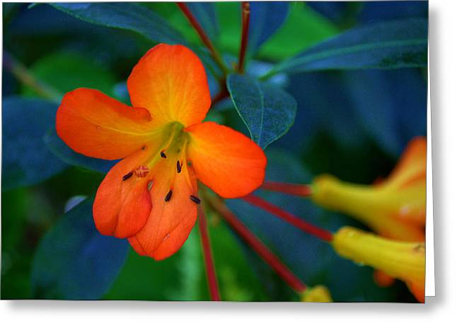 Small Orange Flower Greeting Card by Tikvah's Hope
