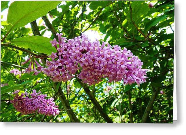 Small Stem Of Gods Beauty Greeting Card by Jeanette Oberholtzer