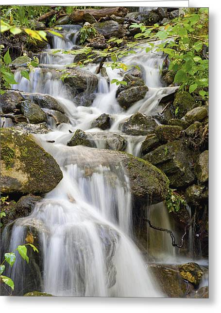 Small Waterfalls And Brook West Bolton Greeting Card by David Chapman