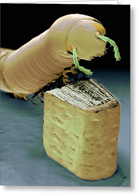 Smallest Book And Millipede, Sem Greeting Card by Volker Steger