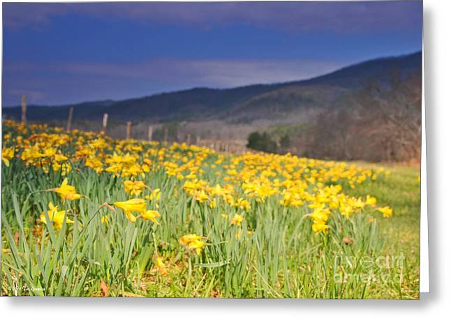 Smoky Mountain National Park Daffodil Spring Greeting Card