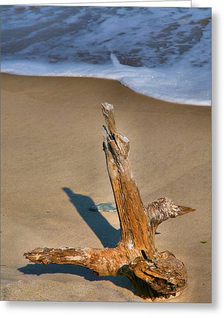Snag And Surf II Greeting Card by Steven Ainsworth