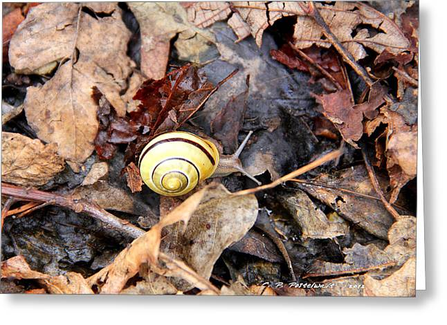 Snail In The Leaves Greeting Card by Carolyn Postelwait
