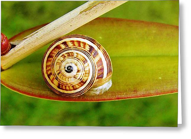 Greeting Card featuring the photograph Snail On Leaf by Werner Lehmann