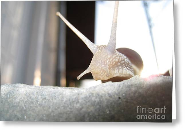 Greeting Card featuring the photograph Snails 1 by AmaS Art