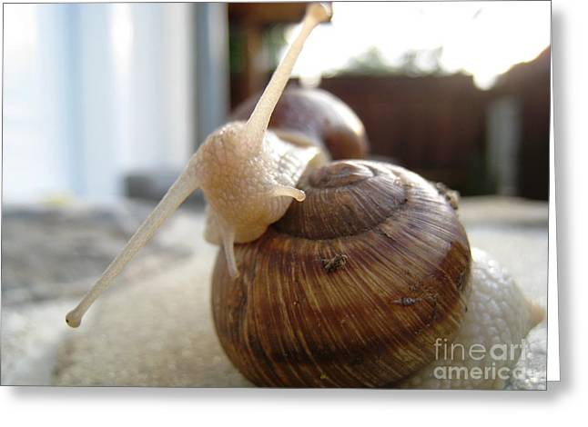 Greeting Card featuring the photograph Snails 10 by AmaS Art