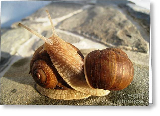 Greeting Card featuring the photograph Snails 11 by AmaS Art
