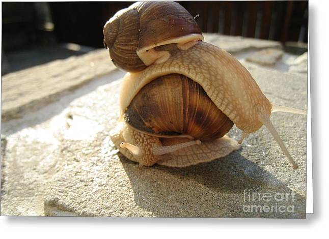 Greeting Card featuring the photograph Snails 14 by AmaS Art
