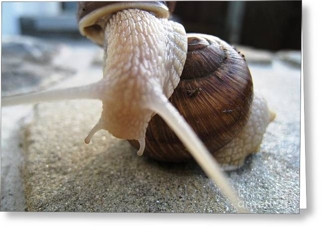 Greeting Card featuring the photograph Snails 15 by AmaS Art