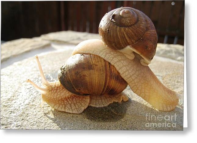 Greeting Card featuring the photograph Snails 17 by AmaS Art