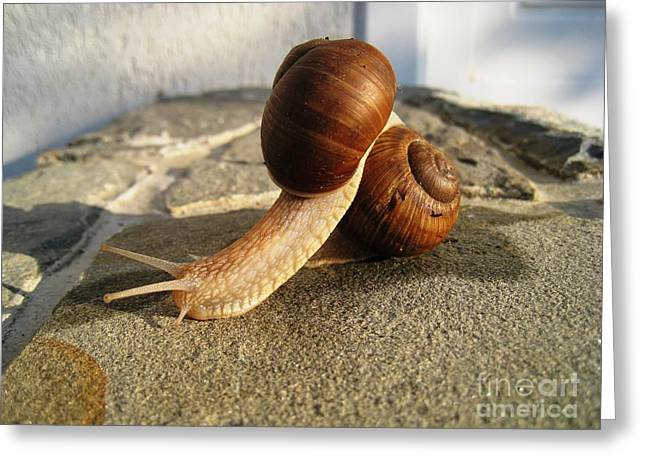 Greeting Card featuring the photograph Snails 18 by AmaS Art