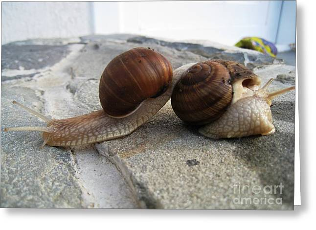 Greeting Card featuring the photograph Snails 19 by AmaS Art