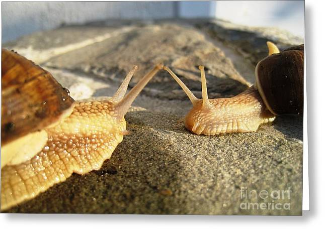 Greeting Card featuring the photograph Snails 2 by AmaS Art