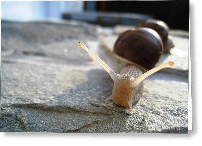 Greeting Card featuring the photograph Snails 20 by AmaS Art