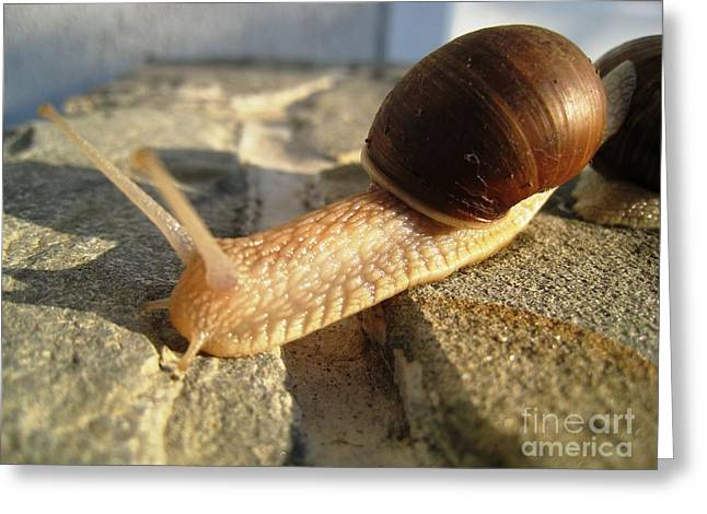 Greeting Card featuring the photograph Snails 21 by AmaS Art