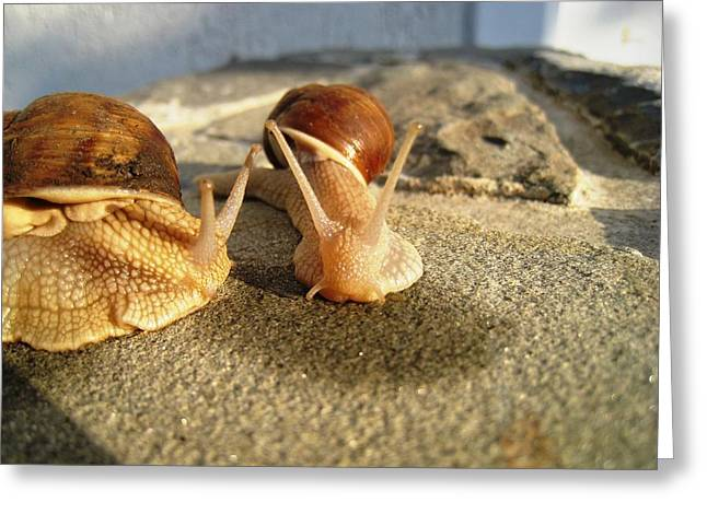 Greeting Card featuring the photograph Snails 24 by AmaS Art