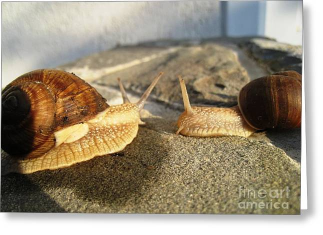 Greeting Card featuring the photograph Snails 3 by AmaS Art