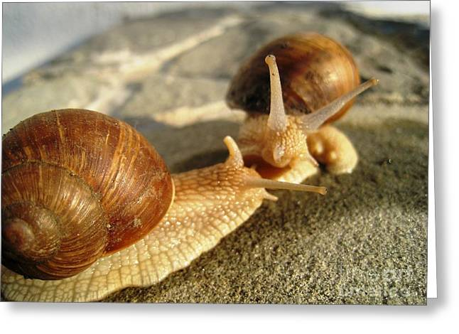 Greeting Card featuring the photograph Snails 4 by AmaS Art