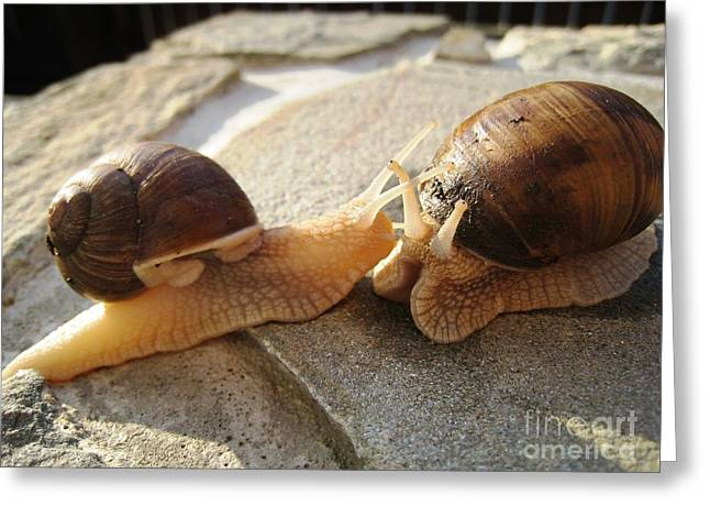 Greeting Card featuring the photograph Snails 5 by AmaS Art