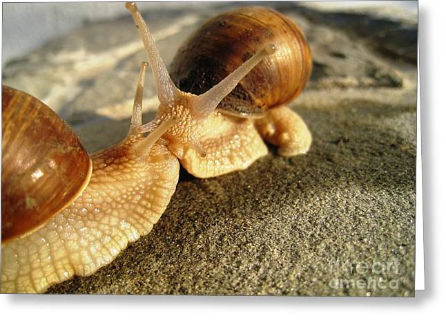 Greeting Card featuring the photograph Snails 6 by AmaS Art