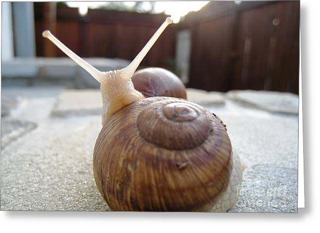 Greeting Card featuring the photograph Snails 7 by AmaS Art