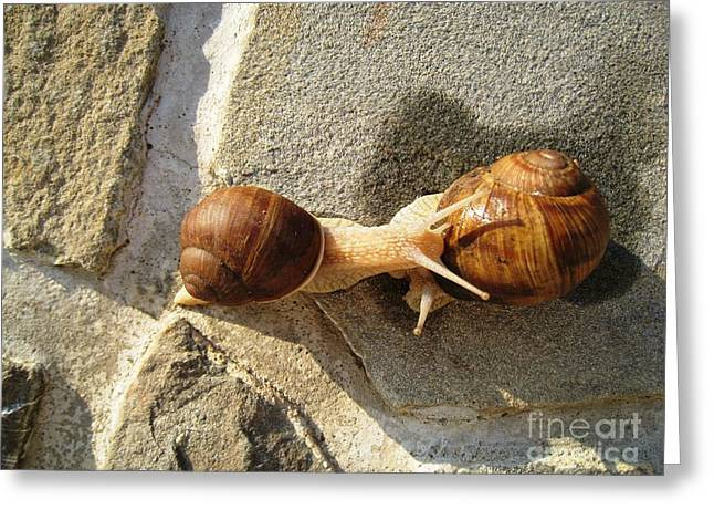 Greeting Card featuring the photograph Snails 8 by AmaS Art
