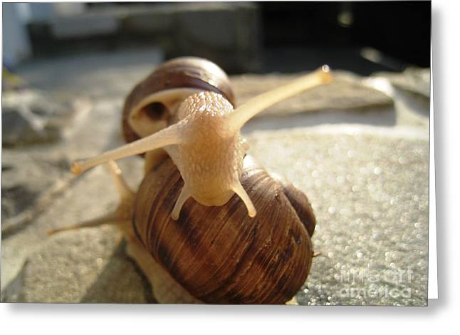 Greeting Card featuring the photograph Snails 9 by AmaS Art