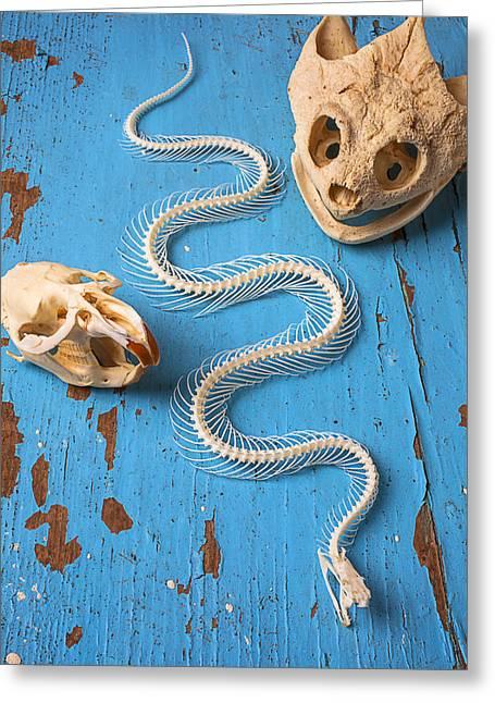 Snake Skeleton And Animal Skulls Greeting Card by Garry Gay