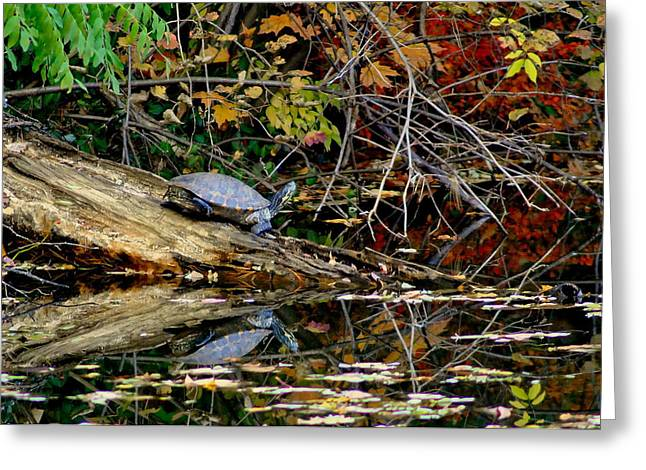 Snapper Turtle Greeting Card by Frozen in Time Fine Art Photography