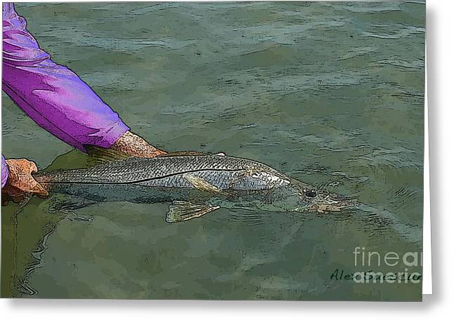 Tarpon Drawings Greeting Cards - Snook Revival Greeting Card by Alex Suescun