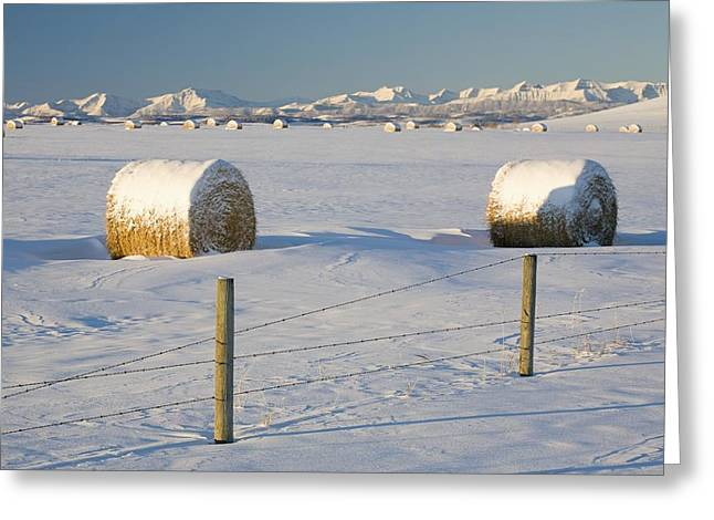 Snow Covered Hay Bales In A Snow Greeting Card by Michael Interisano
