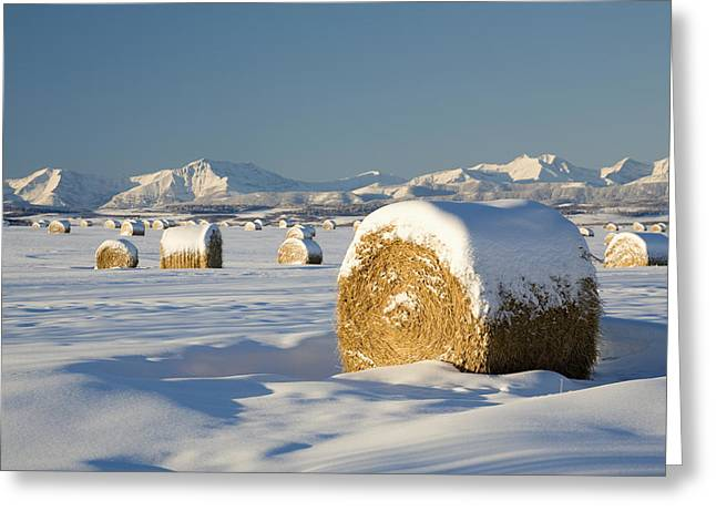 Snow-covered Hay Bales Okotoks Greeting Card by Michael Interisano