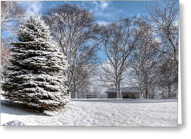 Snow Covered Pine Greeting Card by Richard Gregurich