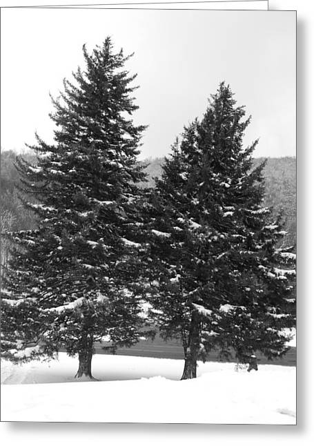 Snow Covered Trees Greeting Card by Carrie Munoz